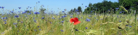Ökologische Landwirtschaft in Brandenburg