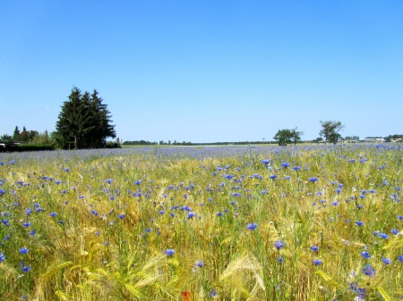 Organic grain production in East Germany (Photo Sebastian Lakner, 2011)