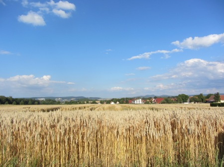 Conventional wheat production 2015 in the region of Göttingen