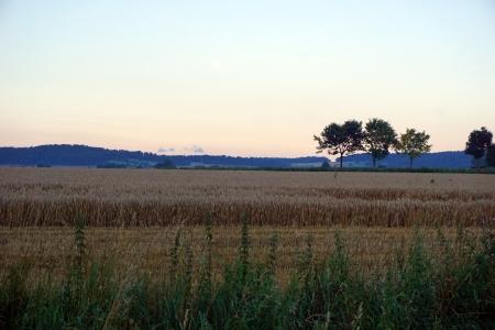 Weizen_Sonnenaufgang